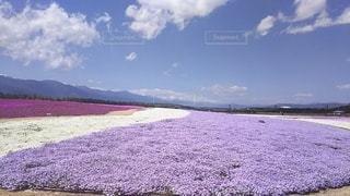 自然,風景,空,花,屋外,ビーチ,雲,景色,地面,草木,日中,クラウド