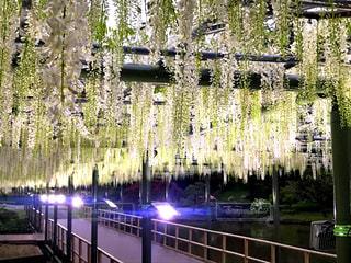 木々を背景にした水の上の橋の写真・画像素材[2276238]