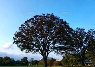 自然,風景,空,芝生,屋外,散歩,樹木,広場