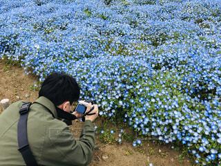 花,屋外,植物,散歩,ブルー,ネモフィラ,レジャー,茨城,お散歩,ライフスタイル,おでかけ
