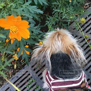 犬,花,屋外,晴れ,散歩,道,お散歩,おでかけ,mix犬