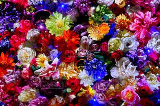 鮮やかな花の写真・画像素材[2365852]