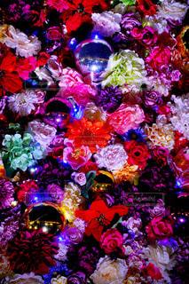 鮮やかな花の写真・画像素材[2365853]