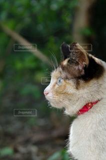 横顔の猫さんの写真・画像素材[2977304]