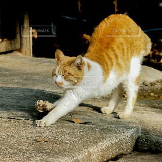 ノビをする猫さんの写真・画像素材[2977323]