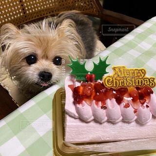 椅子に座ってクリスマスケーキを待つワンコの写真・画像素材[4022575]