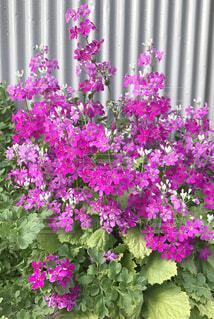 町中で見かけた小さな花の写真・画像素材[4288012]