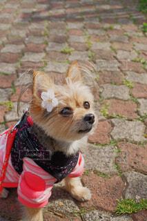 花飾りをつけた犬 ( 2 )の写真・画像素材[4324073]