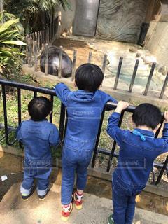 動物園にての写真・画像素材[2239756]