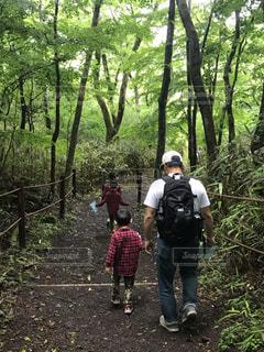 子ども,家族,風景,森林,屋外,後ろ姿,樹木,人物,人,ハイキング,男の子