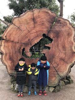 子ども,3人,自然,空,屋外,太陽,子供,光,樹木,人,立つ,象,切り株,男の子,木目,兄弟,三兄弟