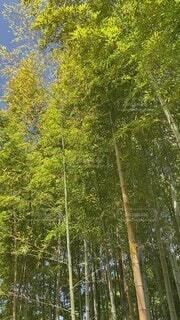自然,空,屋外,新緑,癒し,風,竹林,初夏,小鳥のさえずり