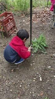 子ども,風景,屋外,人物,人,土,キャンプ,地面,幼児,男の子,草木,お手伝い,履物,釘打ち