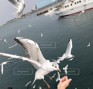 水域の上を飛ぶカモメの群れの写真・画像素材[2337010]