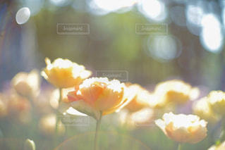 花のクローズアップの写真・画像素材[2316532]