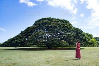 青空の下で木を眺める女性の写真・画像素材[2432812]