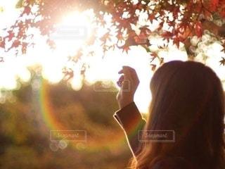 夕日の光を紅葉を見ている女性の後ろ姿の写真・画像素材[2661169]