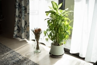 窓際に置いてある観葉植物とドライフラワーの写真・画像素材[2775393]