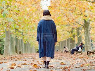 秋の公園の並木道を歩く女性の写真・画像素材[2861995]