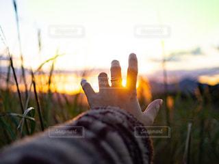 風景,空,秋,夕日,屋外,太陽,夕焼け,手,日没,光,ススキ,ススキ畑