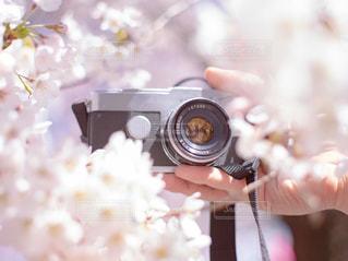 満開の桜を背景にフィルムカメラ持つ人の手の写真・画像素材[3054452]