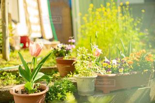 庭に置かれた鉢植えの花々の写真・画像素材[3054704]