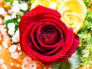 花束のクローズアップの写真・画像素材[3089122]