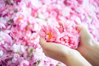 花,花束,バラ,花びら,手持ち,人物,人,ポートレート,ライフスタイル,草木,手元,フラワーシャワー,ブルーム,ブロッサム