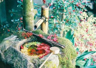 紅葉のグラデーションと手水舎の写真・画像素材[3712578]