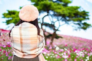 ストールを羽織った女性とコスモス畑の写真・画像素材[3762286]