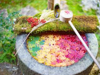 日本庭園に飾られている紅葉の写真・画像素材[3804509]
