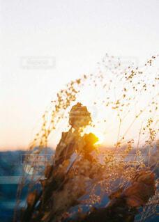 朝日,ドライフラワー,街,朝焼け,正月,お正月,日の出,新年,初日の出