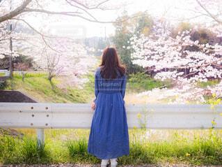 桜を眺めているワンピースを着た女性の後ろ姿の写真・画像素材[4337400]