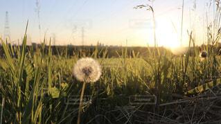 野原の黄色い花の束の写真・画像素材[2280245]