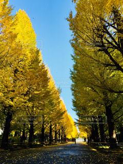 イチョウと秋の空の写真・画像素材[885604]