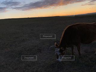 空,太陽,朝日,草原,牛,光,モンゴル