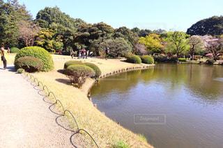 自然,風景,散歩,池,ハート,マーク