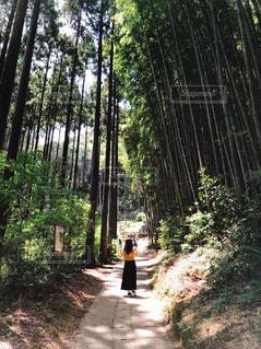 自然,晴れ,散歩,景色,パワースポット,竹林,マイナスイオン,デート,お散歩,ライフスタイル,おでかけ