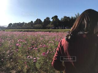秋,コスモス,散歩,景色,マイナスイオン,友達,お散歩,ライフスタイル,おでかけ