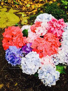 花,ハート,紫陽花,癒し,梅雨,おでかけ,アジサイ