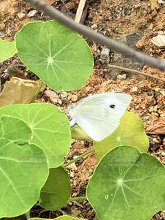 緑の植物のクローズアップの写真・画像素材[2267461]