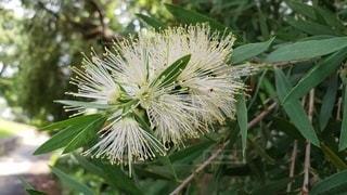 公園に咲く 名前を知らない花の写真・画像素材[2279811]