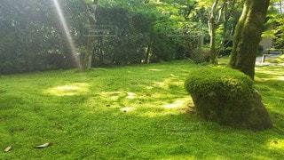 京都 西芳寺 苔に降り注ぐ木漏れ日の写真・画像素材[3142811]