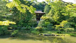 奈良 円成寺 春の庭園の写真・画像素材[3143462]