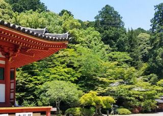 大阪 観心寺 春の境内の写真・画像素材[3143467]