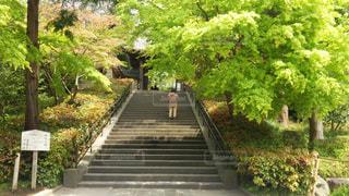 鎌倉 円覚寺 春の参道口の写真・画像素材[3143468]