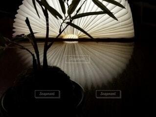 笹の葉と光る扇の写真・画像素材[4634411]