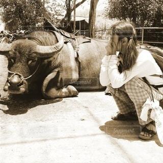 水牛と話をするカウガールの写真・画像素材[4703927]