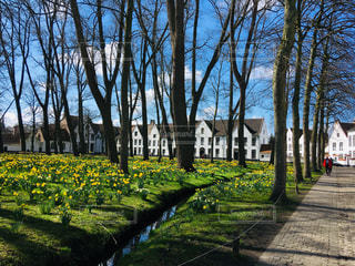 自然,建物,花,木,緑,晴れ,散歩,世界遺産,ベルギー,明るい,お散歩,ブルージュ,修道院
