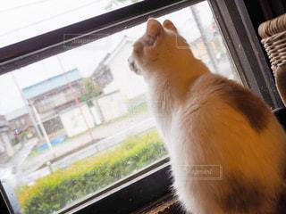 猫,動物,屋内,窓,ペット,座る,窓際,見つめる,ネコ,眺める,猫の日